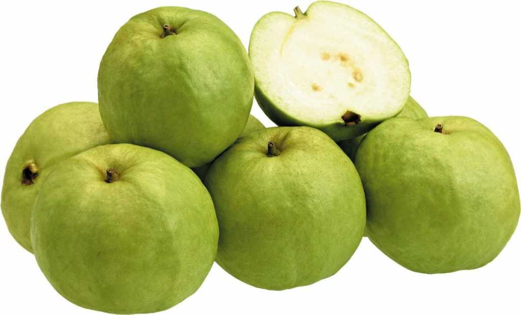 Fruit-guava