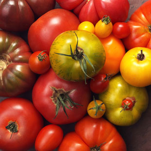 tomatoes_bunch