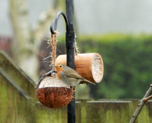 Coconut Bird Feeder