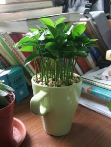 how-to-grow-a-lemon-tree-from-seed-in-a-pot-indoors-9