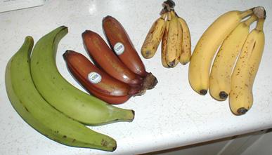 type of banana