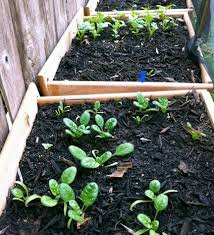 planting with drawer