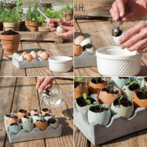 egg-shell-planting