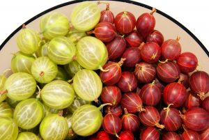 red and green gooseberry isolated on white background