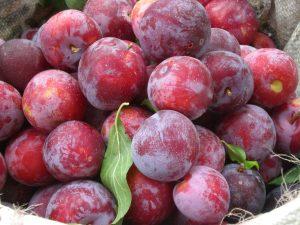 close-up-plums