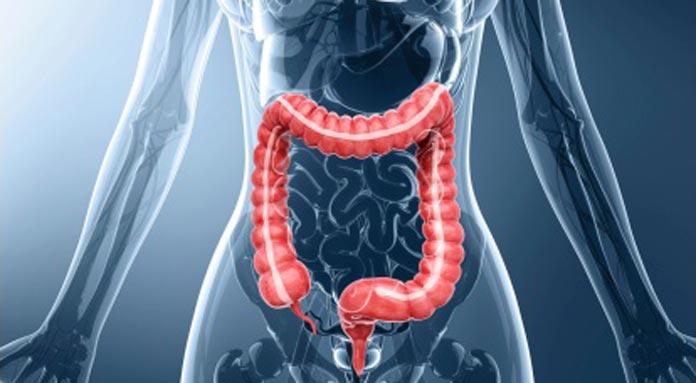 digestive-system-04