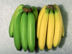 ripe-and-unripe-bananas