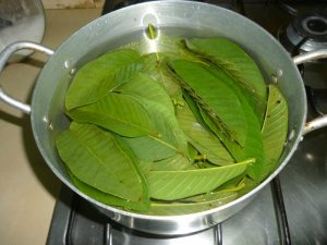 Guava-Leaves-Health-Benefits