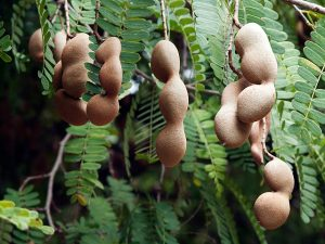 Tamarind_getty_640x480