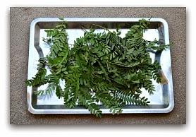 Tamarind leaves 1