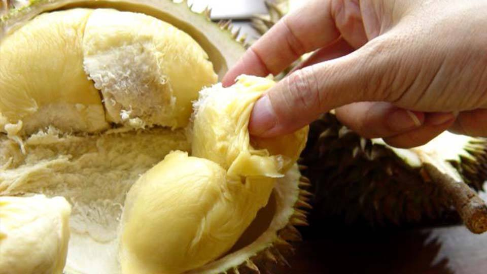 Durian-Fruit-3