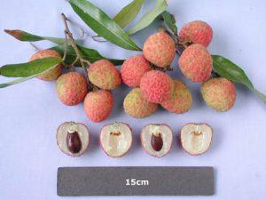 The-Ohia-lychee