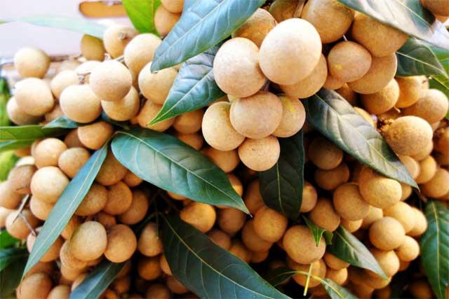 health-benefits-of-longan-fruit