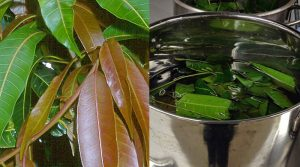 mango-leaf-tea