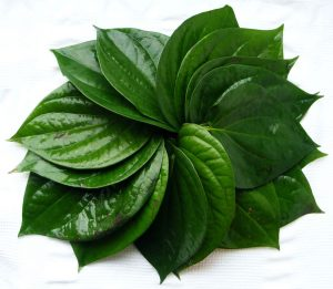 nutrition-fact-of-betel-leaves-561561