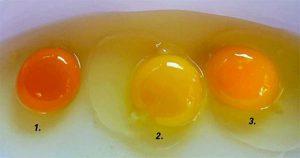 eggyolkcolor