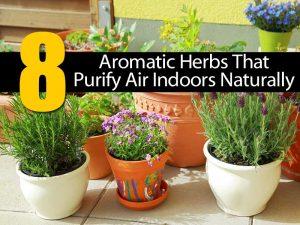 herbs-purify-air-063014