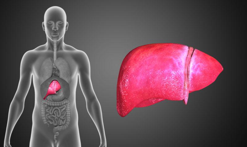 liver-2-e1466770738592