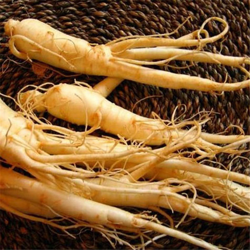 30pcs-Vegetables-and-fruit-seeds-Chinese-hardy-Panax-Ginseng-Korea-Ginseng-Seeds-Herbal-Seeds-Grow-your