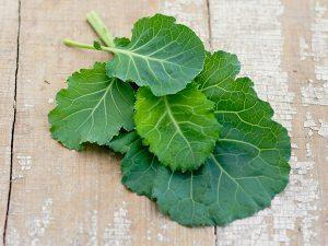 Kale-Tronchuda