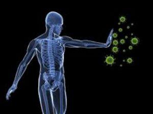 bifidus-immune-system