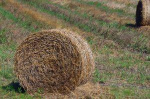 straw_bale_harvest_rural_field_agriculture_nature_summer-1287057.jpg!d
