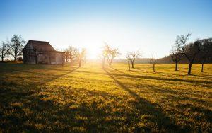 tree_field_barn_orchard_prairie-144.jpg!d