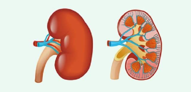 kidneywaterfiltration