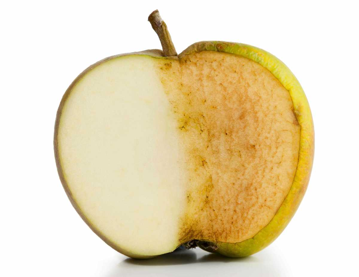 လွီးထားတဲ့ အသီးေတြ မဝါသြားေအာင္ ဘယ္လို လုပ္ထားမလဲ။