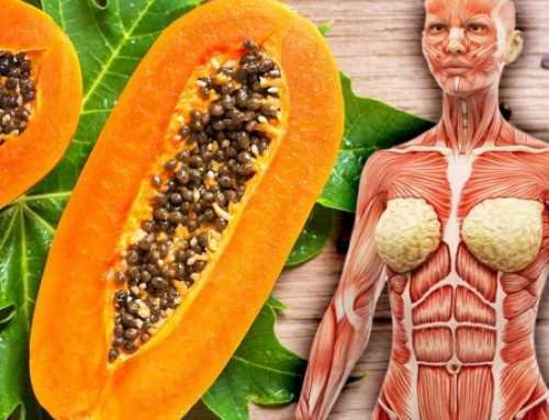 သင်္ဘောသီးကို တစ်ပတ်တစ်လုံးပုံမှန်စားသုံးပေးခြင်းကြောင့် ခံစားရရှိမယ့် ကျန်းမာရေးအကျိုးကျေးဇူးများ